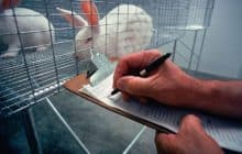 South Korea Implements Animal Testing Ban: Will The United States Follow?