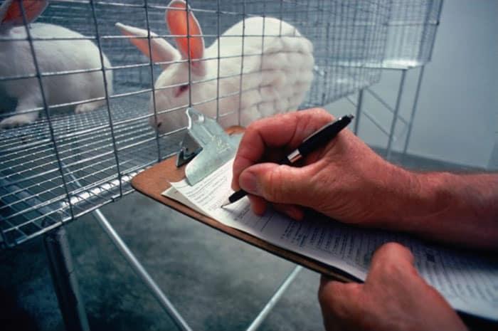 bunnies-cage