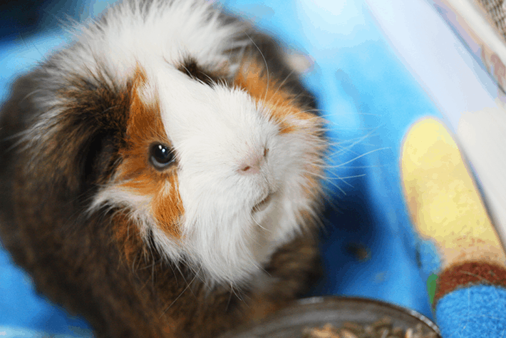 The Cruelty-Free Revolution: All About Animal Testing And