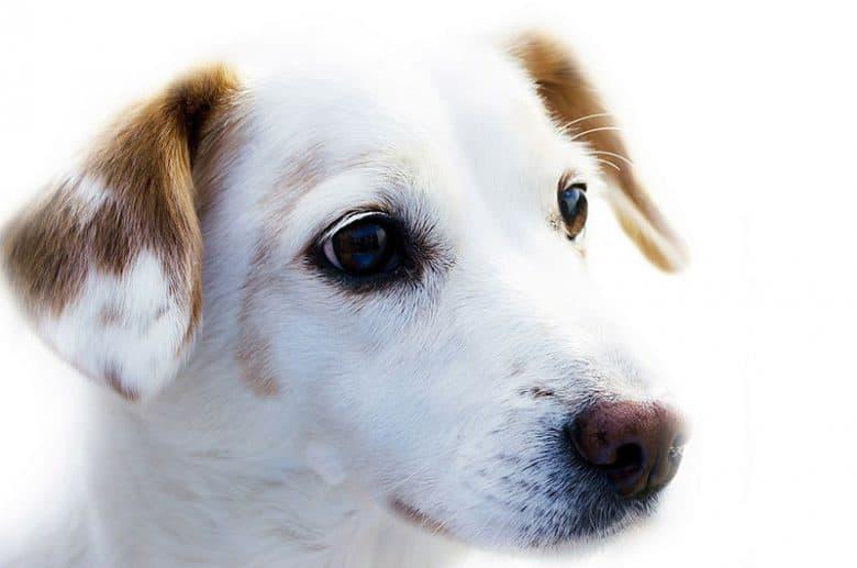 cruelty-free-dog-food