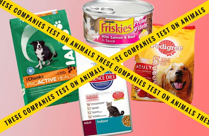 Pet Food Amp Animal Testing A Horror Story Cruelty Free Kitty