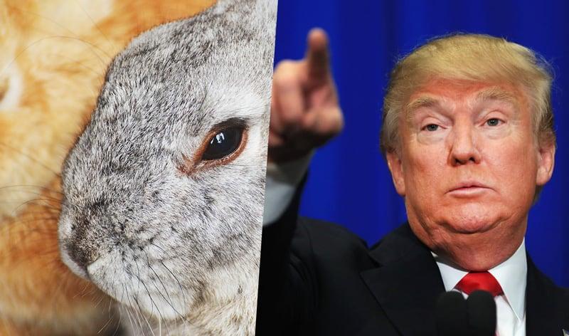 trump-animal-testing