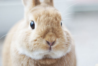 How L Oreal Is Misleading Customers About Being Cruelty Free