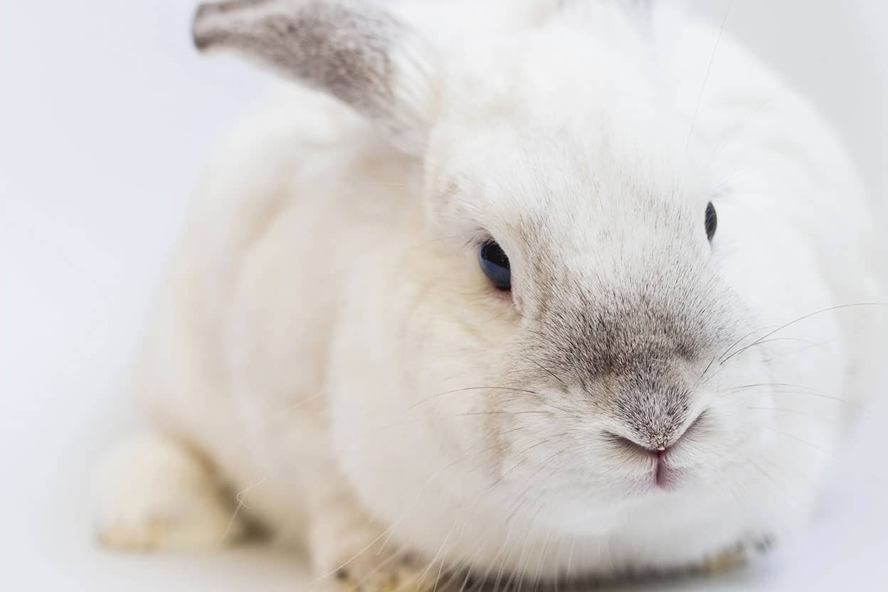 Cruelty-Free Kitty – The Ultimate Cruelty-Free Guide