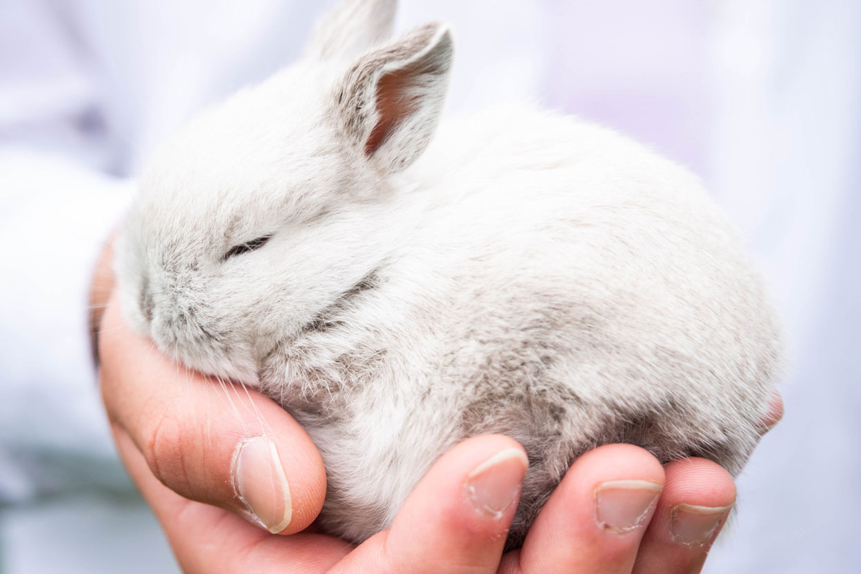 China Ending Mandatory Animal Testing